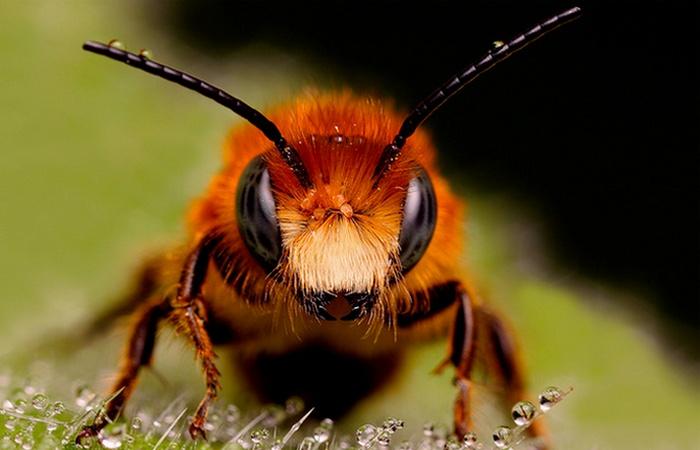 Осадная тактика: «Ульи пчел».